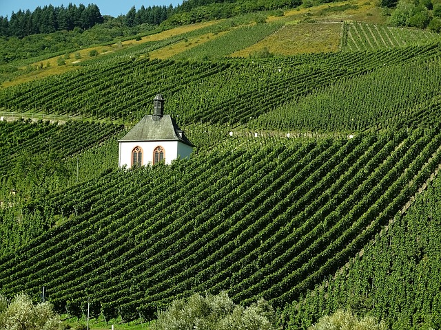 Francja nie jest już największym producentem wina