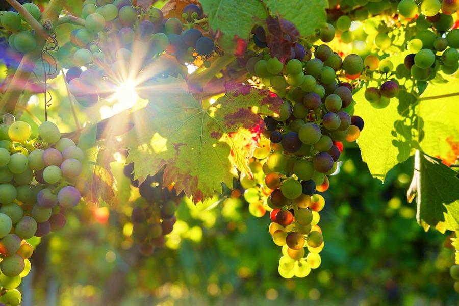Francja – kraj winem płynący
