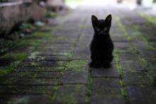 Kary dla właścicieli kotów za brak chipa czy tatuażu