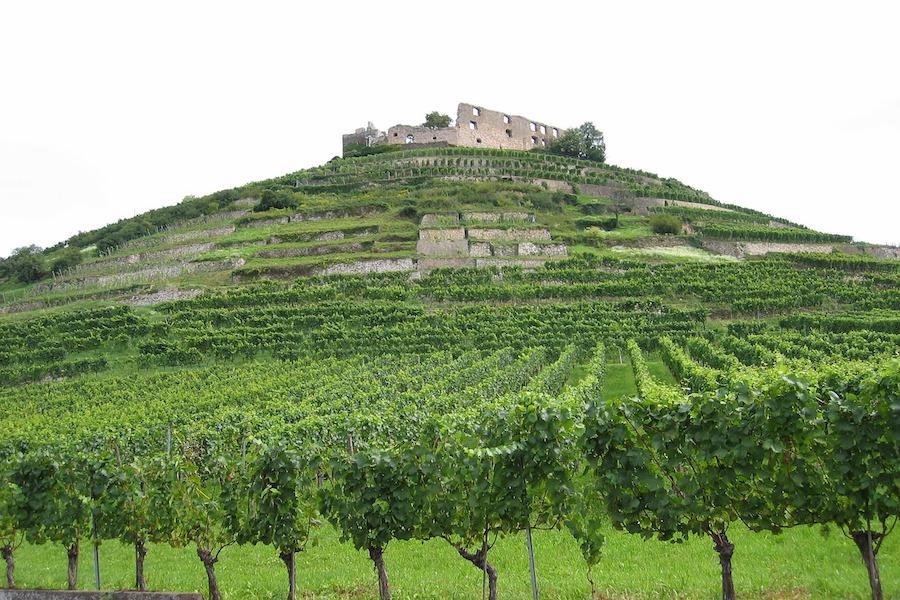 Zmiany klimatyczne wpłyną na produkcję wina we Francji