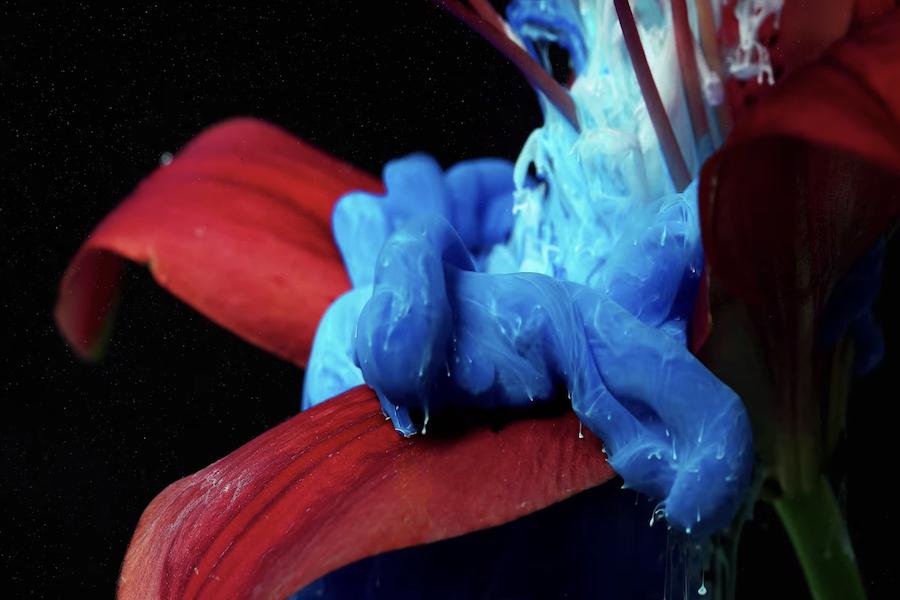 Atelier des Lumières – cyfrowe centrum sztuki w Paryżu, zaprasza do świata wyobraźni i kolorów!