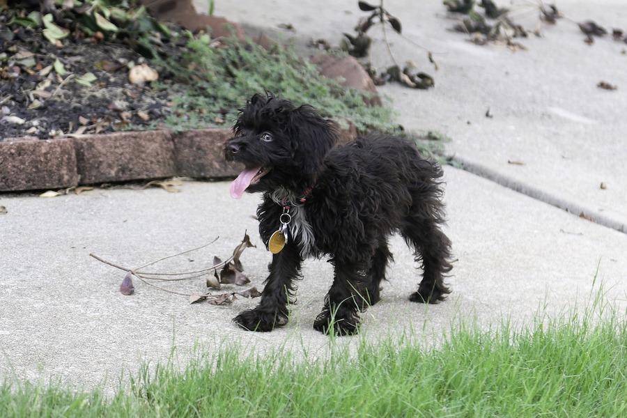 Wysoki mandat za pozostawianie psich odchodów