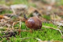 Zbieranie grzybów we francuskich lasach. Co mówi prawo?