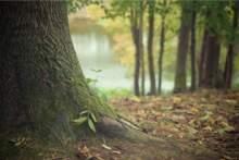 W regionie Ile-de-France otwarto 39 lasów
