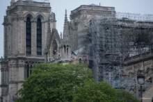 Dęby przeznaczone na odbudowę katedry Notre Dame jadą do suszarni