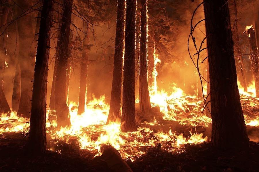 W Żyrondzie spłonęło 250 hektarów lasu