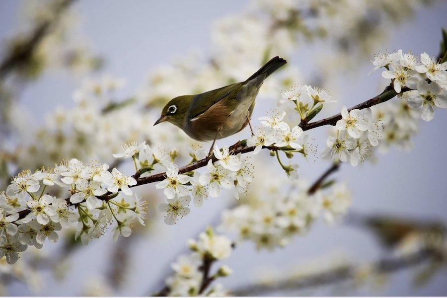 Rada Stanu poparła rządowy zakaz polowania na ptaki na klej