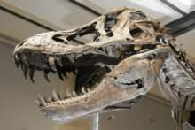 Szkielet dinozaura sprzedany za 3 mln euro