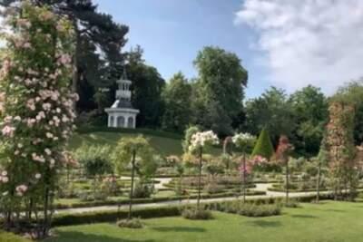 Róże w paryskim parku Bagatelle